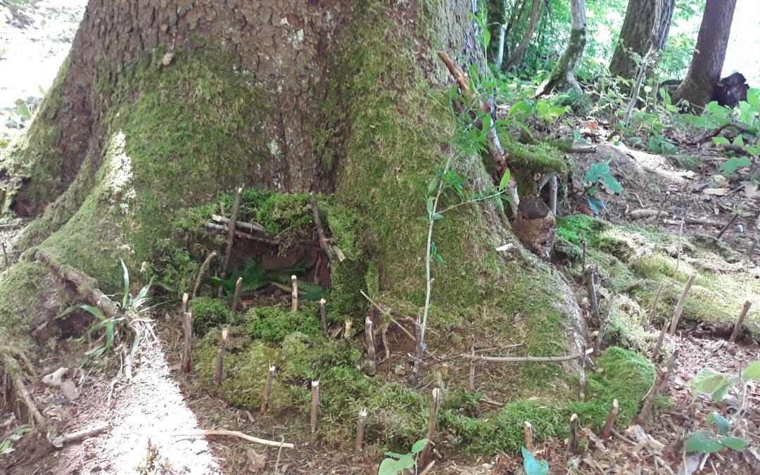 Spoznavanje dreves in oblikovanje iz naravnih materialov v 4. razredu